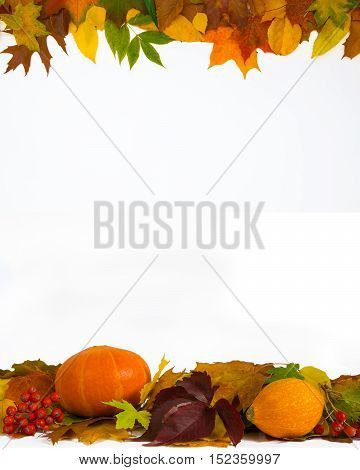 Autumn decoration made of leaves coral rowan and pumpkins on a white background. Frame four-fifths.