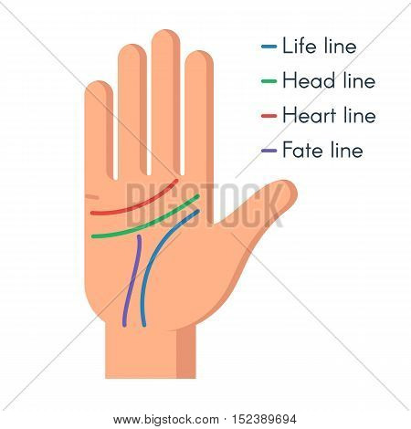 Palmistry concept. Human hand, the value of the lines on the palm. Vector flat illustration isolated on white background