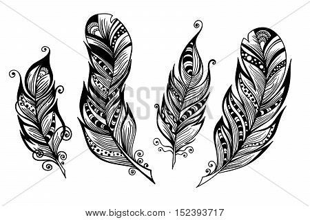 Vector set of four decorative feathers. Vector illustration for your design ready to use, isolated on white. Hand sketched plumes