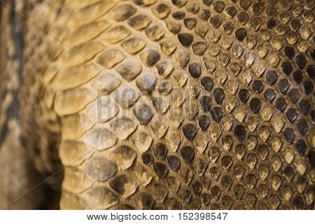 Snake Skin Texture Use For Background