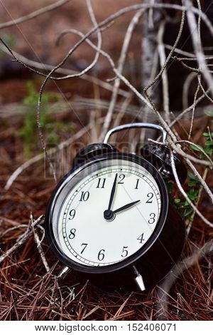 closeup of an alarm clock in the ground of a forest in autumn