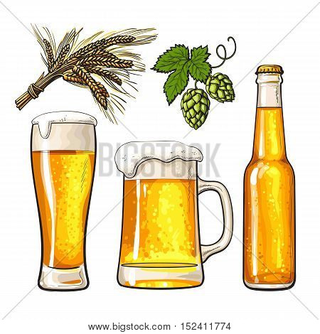 Set of cold beer bottle, mug and glass, malt and hop, sketch vector illustrations isolated on white background. Hand drawn beer glass, mug and bottle, branch of hops and ears of barley, Oktoberfest