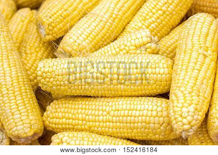 Fresh corn on cobs closeup. Grains of ripe corn. An ear of corn isolated. Corn on the cob, meal ripe juicy tasty corn. Photo of corn background.