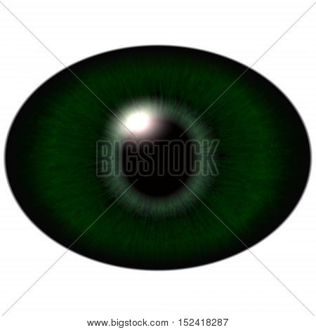 Green Animal Eye With Large Pupil And Bright Retina In Background. Dark Green Iris