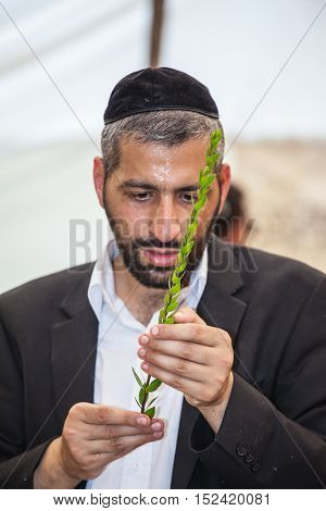 JERUSALEM, ISRAEL - OKTOBER 8, 2014:  Young religious man in a gray skullcap carefully chooses ritual  myrtle - adas for Sukkot