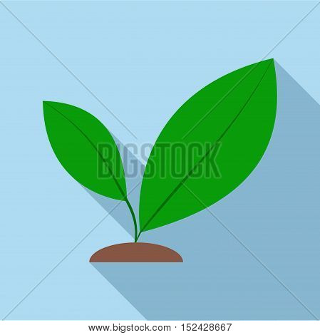 Green sprout icon. Flat illustration of green sprout vector icon for web