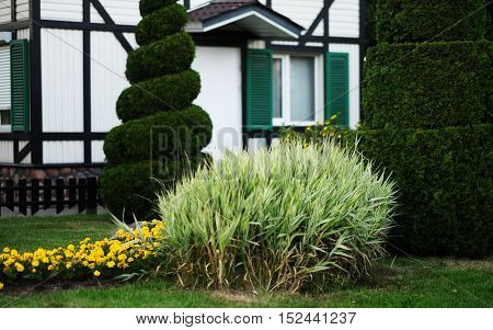 Flowers in front of the house, front yard. Landscape design. Summer day.