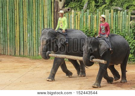 Mahout With Asian Elephant