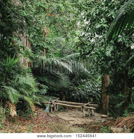 Tropical rainforest jungle in Malaysia. Feel of nature.