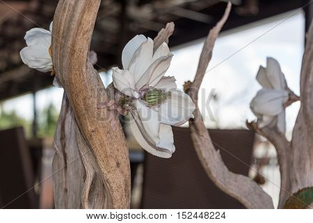 Detailed Artificial Lotus Blossom attached to a wooden branch