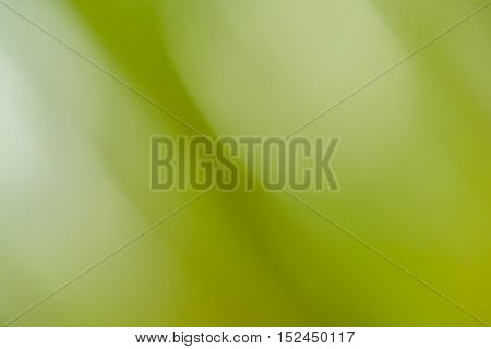 Motion blurred green plants for backgrounds use