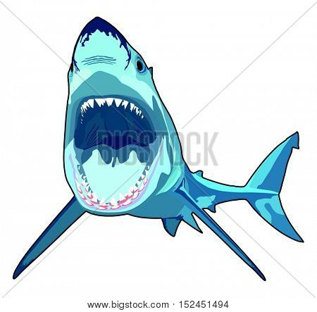 Shark with opened mouth in attack position and sharp teeth