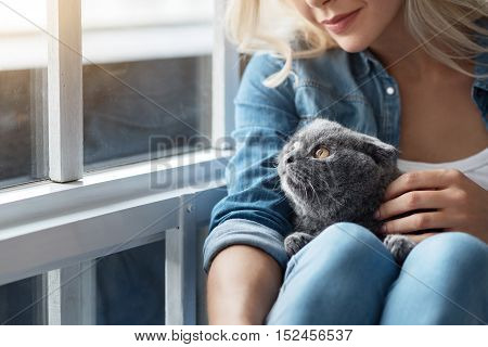 My sweetheart. Close up portrait of blond woman patting her British cat near window.