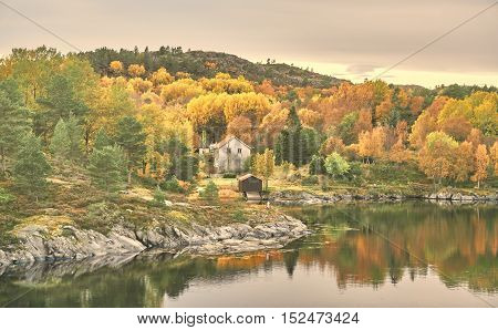 Helgebostadoya Norway - October 17 2016: Norwegian scene with colors autumn forest. Windy day. Around the tree and rocks covered with mosses and lichens. Region of Mid Norway -Trondelag.