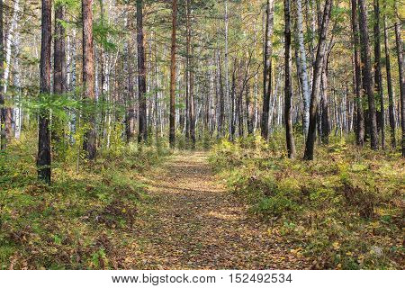 Track among trees in the autumn forest