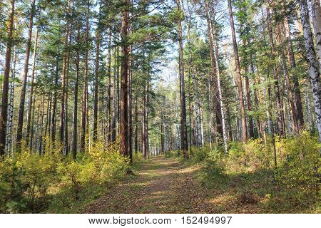 The trail is in a quiet, peaceful autumn forest