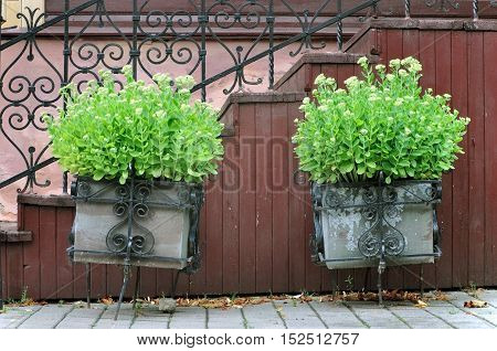 Two metal flower stands with growing green sedum against the backdrop of a city street.
