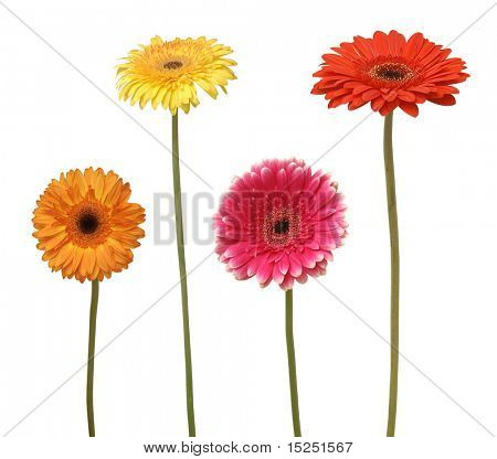 four flowers isolated on white