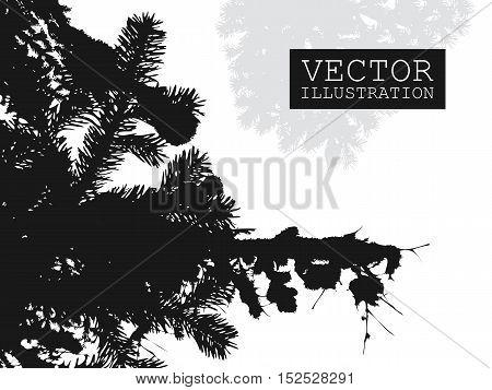 Spruce branch silhouette vector black white illustration