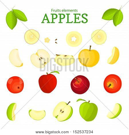 Vector set of fruits. Apple fruit, whole, peeled, piece of half, slice, leaves, seed. Collection of delicious apples designer elements