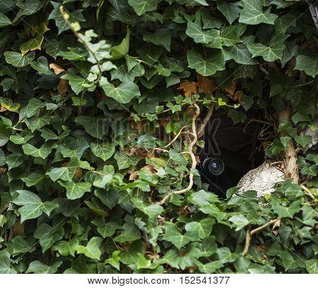 Hidden surveillance camera in the tiny spot.