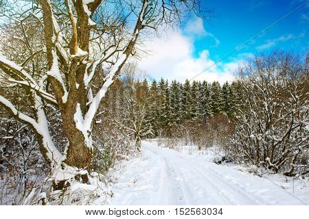 Winter background.Winter forest with trees in the snow. New year background.