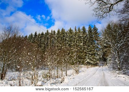 Road and hoar-frost on trees in winter in Germany.White winter landscape in Germany with trees covered in snow and road.