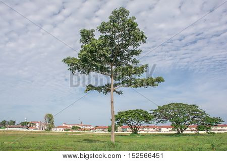 Serene landscape photo of tree in vast grasslands with blue sky and scenery gorgeous clouds pretty exotic.