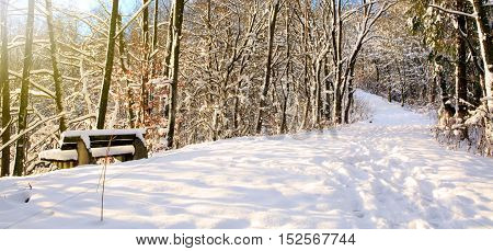Bench in the winter park. Snow covered trees.