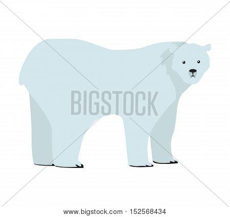 Polar bear flat style vector. Wild and dangerous predatory animal on white background