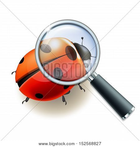 Magnifying glass and LadybUG, education concept. Scientific biology, study nature, vector illustration