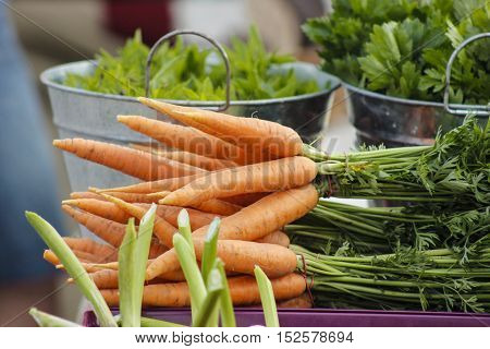 Fresh carrots bunch. Fresh organic orange carrots on a salad background. Clean delicious carrots. Baby carrots.