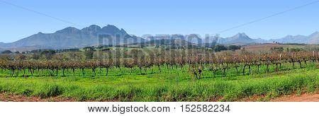 Grape Farm, Stellenbosch, Cape Town South Africa 11mng