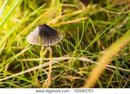 Small Grey Mushroom Grows In A Grass