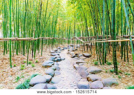 Bamboo forest in Yu garden park Shanghai