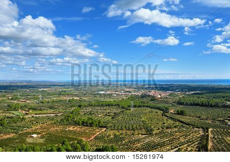 Olive Groves In Costa Daurada, Spain