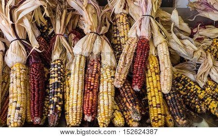 An array of Flint corn at a farmers market