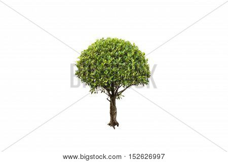 Isolated tree on a white background/Tree on isoled
