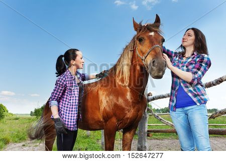 Portrait of two young women brushing beautiful bay horse at the farm in summer