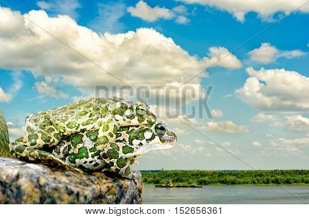 The pairing of the two toads sitting on a rock on a background of the cloudy sky