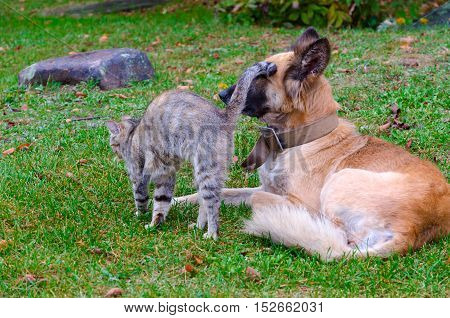 Communication of animals. Friendship of homeless cat and dog