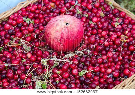 Apple on background of ripe cranberries in wicker basket