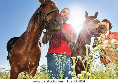 Portrait of two male equestrians with chestnut brown horses in summer field at summer day