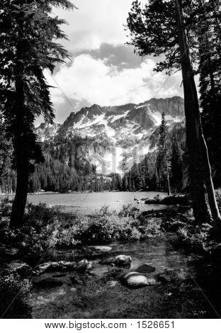 T.J. Lake