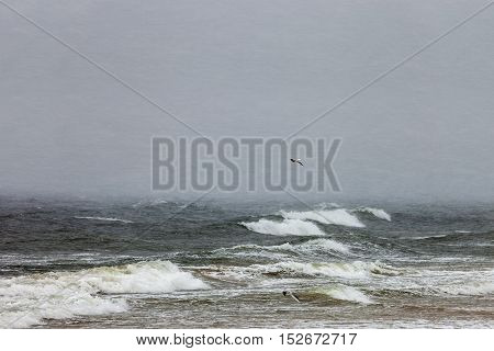 Storm on Baltic sea during a violent blizzard.
