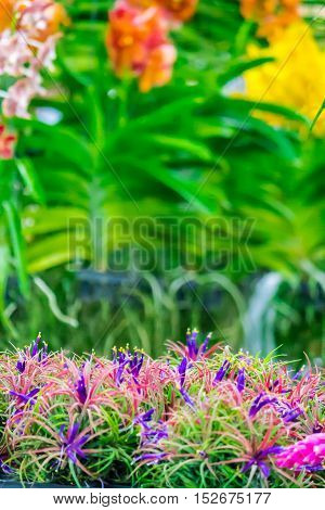 Rows of Tillandsia and orchid remix for decoration in cozy garden.
