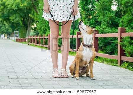 Dog on a leash looking and listening to her owner. Trained sitting dog on a leash looking up and listening to her owner, young female in dress.