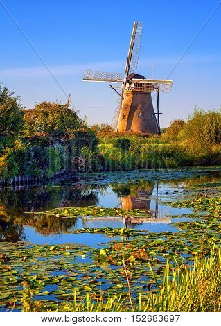 Windmill reflecting in a lake covered with water-lillies in Holland Kinderdijk Netherlands