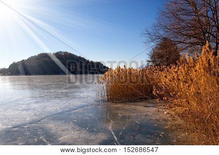 Lago di Serraia (Serraia lake) frozen in winter with reeds trees and sun rays. Baselga di Pine Trentino Alto Adige Italy