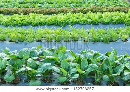 field of mix varity vegetable with plastic cover